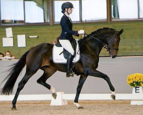 balance dressage training