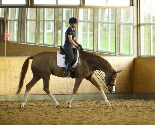 stretching horse forward downward