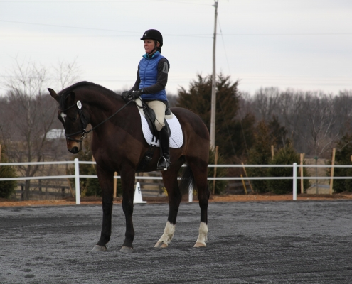 backing up equestrian dressage horsebackriding tips