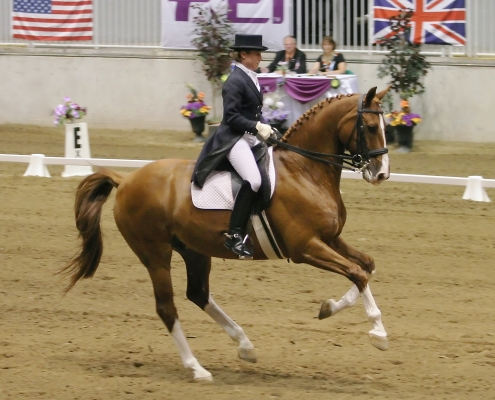 speed dressage canter trot advice tips fitness horsebackriding equestrian