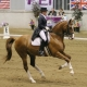 speed dressage canter trot advice tips fitness horsebackriding equestrian