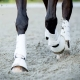 trot collection collected dressage equestrian horsebackriding tips