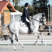 impulsion dressage horsebackriding equestrian tips riding
